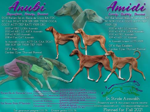 Anu and Ami Litter Announcement 5.jpg