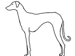 A Comparison of African and Middle Eastern Sighthounds