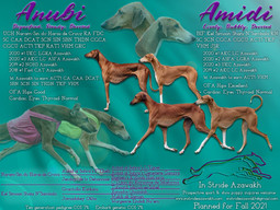 Anubi and Amidi Litter Planned Fall 2021