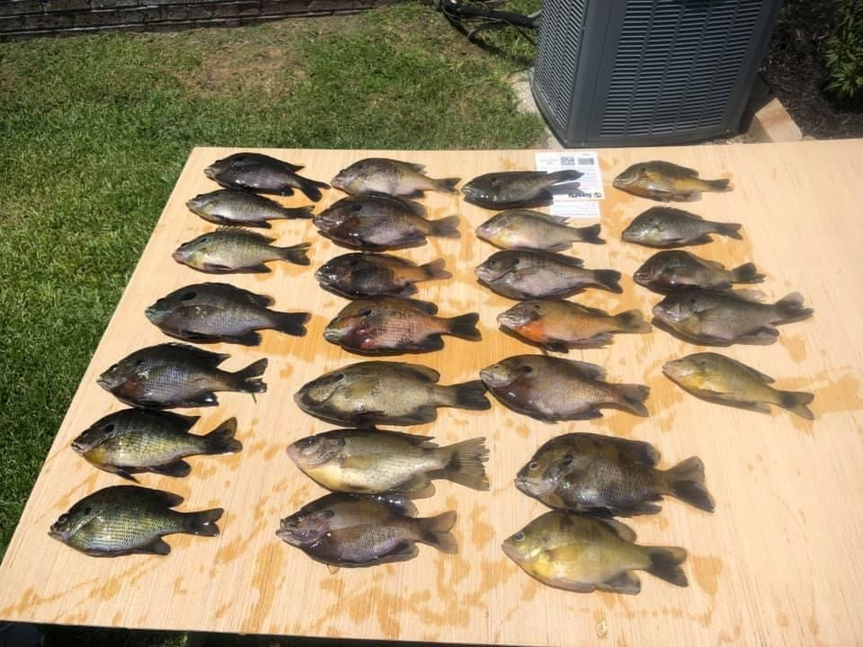 All of My Grandaughters fish she caught with our bugs