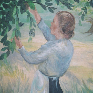 Woman picking pears