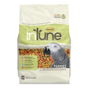 Intune Parrot