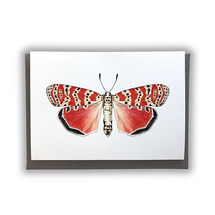 Red Moth Card