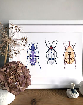 Bug prints framed 3.jpg