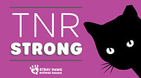 Stray_Paws_Website_Graphic_1.jpg