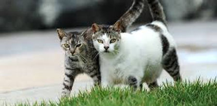 feral cats 5.jpg