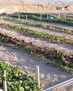 garden_1614803703.jpg