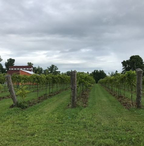 South Vineyard