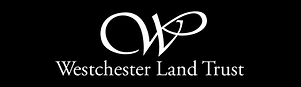 WLT Logo.png