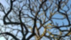 Rye Town Tree March 2020.jpg