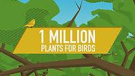 Audubon plants for birds.jpg