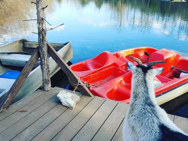 Goats and boats