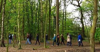 walking woods.jpg