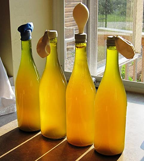 Dandelion Wine - Fermentation in Action!