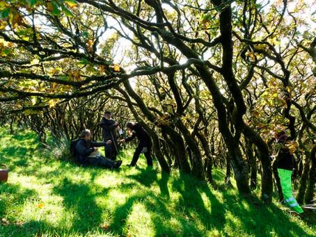Wonderful Woodlands & Heroic Hedgerows