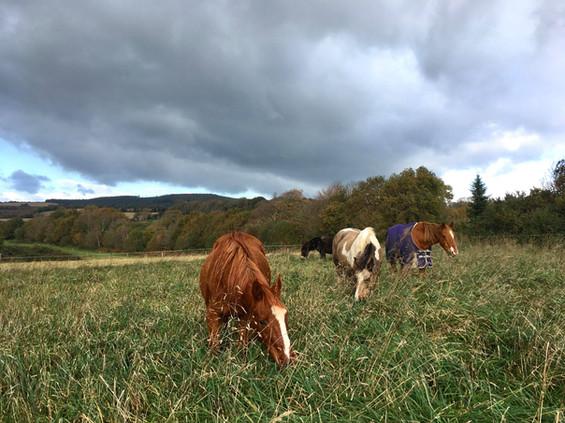 cheval médiation équine équithérapie Plogonnec Douarnenez Quimper Finistère Bretagne mule troupeau pâture pré nuages herbe