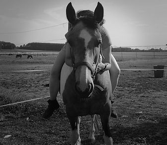 Juliette Masure médiation équine équithérapie Plogonnec Douarnenez Quimper Finistère Bretagne cheval mule séance troupeau pâture pré handicap arbres bien-être détente relaxation porter