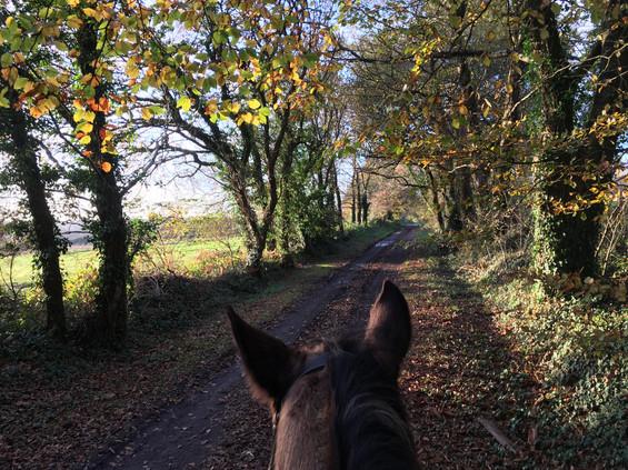 cheval médiation équine équithérapie Plogonnec Douarnenez Quimper Finistère Bretagne balade chemin GR38