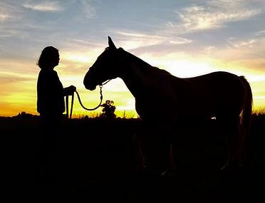 Juliette Masure médiation équine équithérapie cheval coucher de soleil ombre
