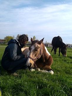 Juliette Masure médiation équine équithérapie cheval connexion confiance mule herbe