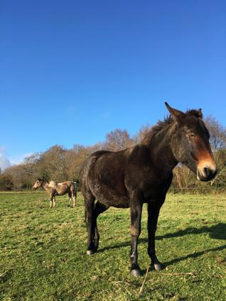 cheval médiation équine équithérapie Plogonnec Douarnenez Quimper Finistère Bretagne pâture pré mule herbe ciel bleu