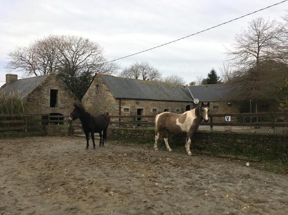cheval médiation équine équithérapie Plogonnec Douarnenez Quimper Finistère Bretagne mule carrière ferme sable nuage