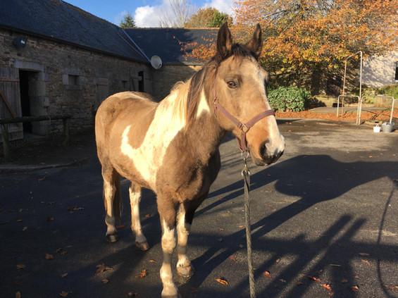 cheval médiation équine équithérapie Plogonnec Douarnenez Quimper Finistère Bretagne licol longe pansage brossage corps de ferme