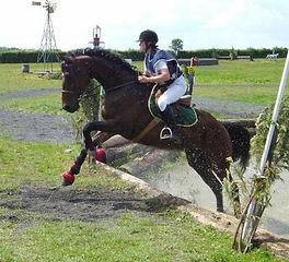 cross cheval médiatin équine équithérapie