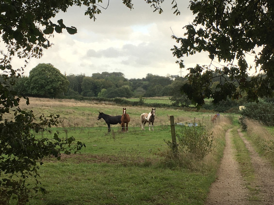 cheval médiation équine équithérapie Plogonnec Douarnenez Quimper Finistère Bretagne