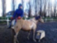 Juliette Masure médiation équine équithérapie Plogonnec Douarnenez Quimper Finistère Bretagne cheval mule séance troupeau pâture pré handicap arbres bien-être assis confortable croupe confiance zen