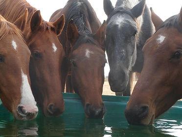Canada Alberta Touchstone Farm chevaux horses élevage médiation équine équithérapie