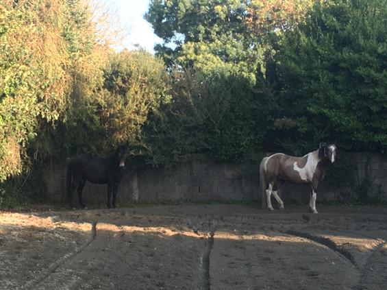 carrière mule cheval médiation équine équithérapie Plogonnec Douarnenez Quimper Finistère Bretagne