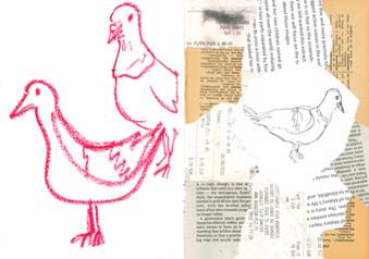4 recherches pigeon E. De Jaham.jpg