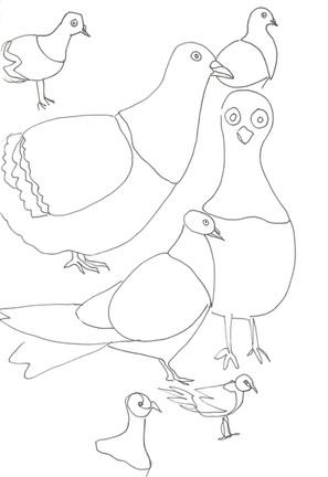 6 recherches pigeon E. De Jaham.jpg
