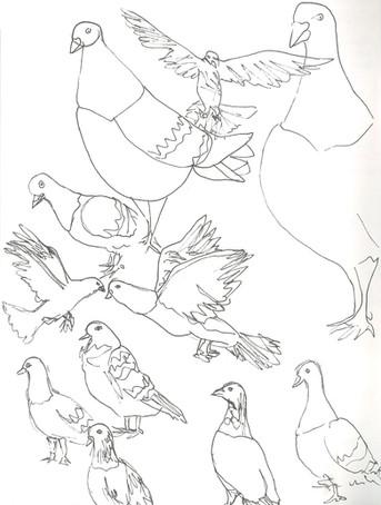1 recherches pigeons E. De Jaham.jpg