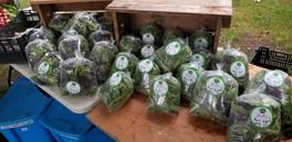 legumes écologiques.jpg