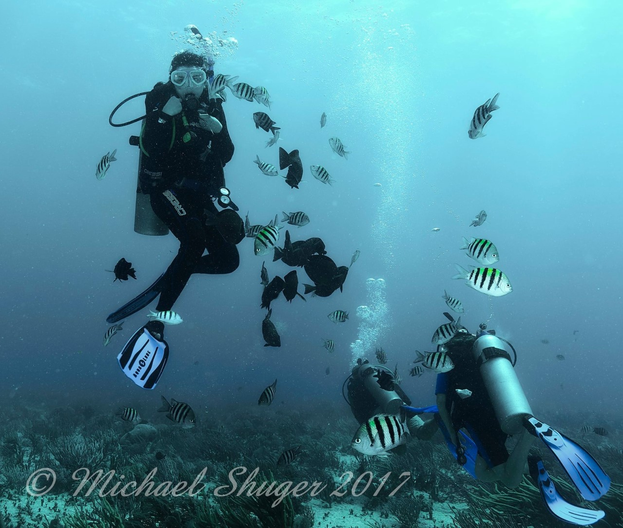 Lili Shuger Dive 1