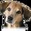 Thumbnail: Magentic Dog Collar