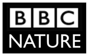 BBC nature