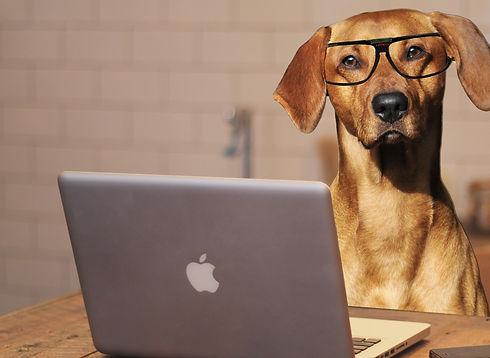 dog-2983021%2520-%2520Copy_edited_edited.jpg