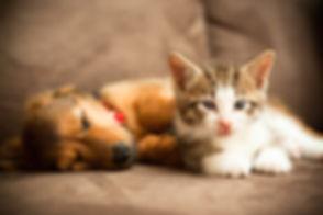 pet visits slider image.jpg