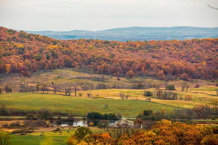 Farm Shot 1.jpg