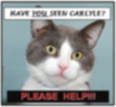 Have you seen Carlyle.jpg