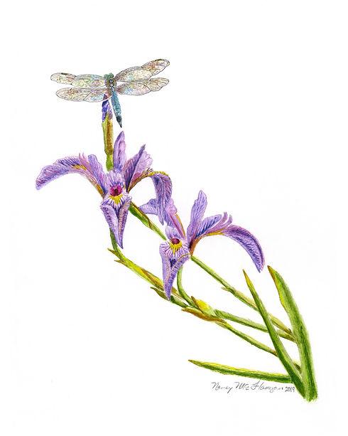 Dragonfly  and Iris_v1.jpg