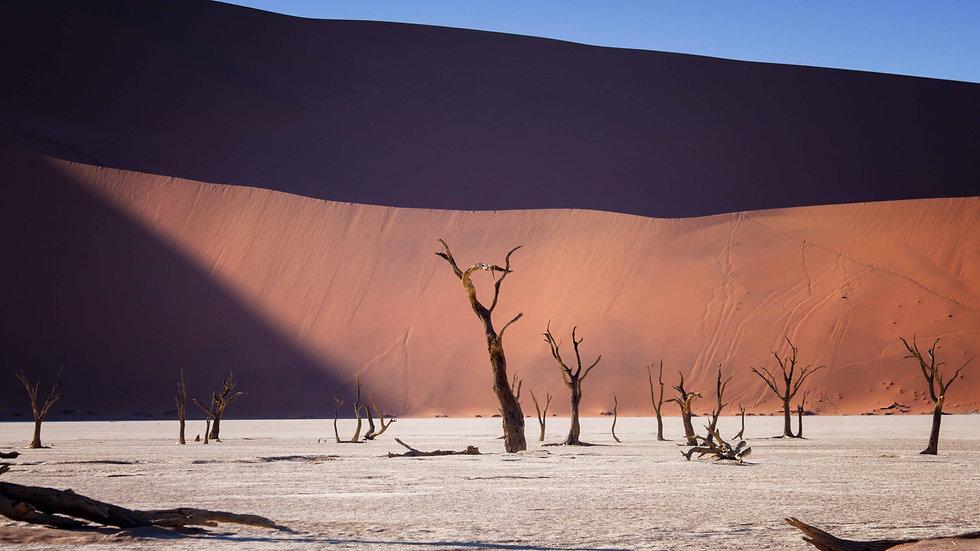 Dead Trees In The Namib Desert No 3