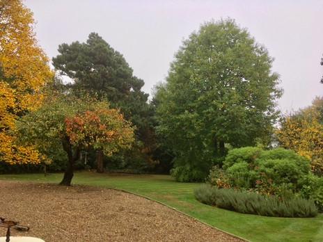 shrub and hedge care