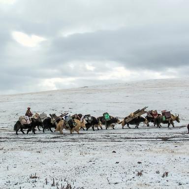 Winter Photographt