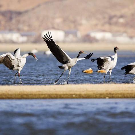 WATER BIRD WATCHING