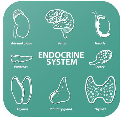 5 Nutrients to Support Your Endocrine Health