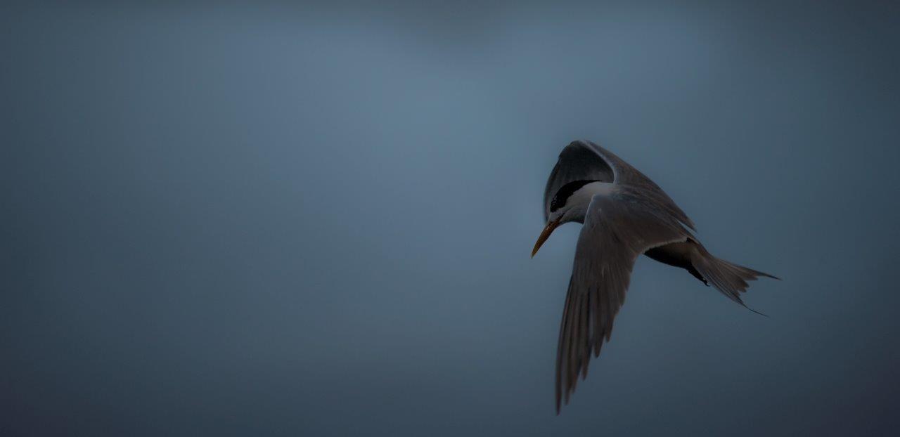 Storm Tern 1